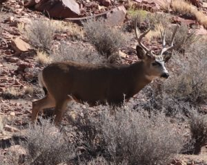 This Mule deer kept his distance.